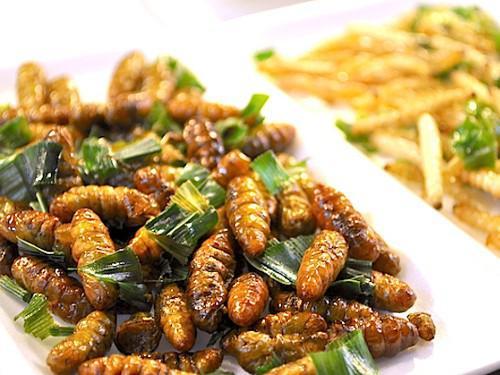 Plat d'insectes comestibles biologique