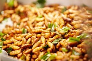 Insectes comestibles biologiques