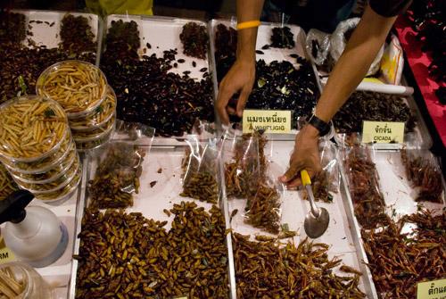 La consommation d'insectes comestibles en Thaïlande est extrêmement répandue.