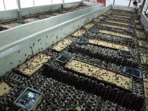 Ferme d'élevage d'insectes comestibles bio en Thaïlande