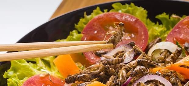 Salade d'insectes comestibles bio, un régal!